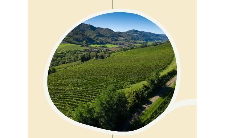 Il Consorzio Vini di Romagna presenta gli eventi del nuovo anno e fa un bilancio della vendemmia 2020