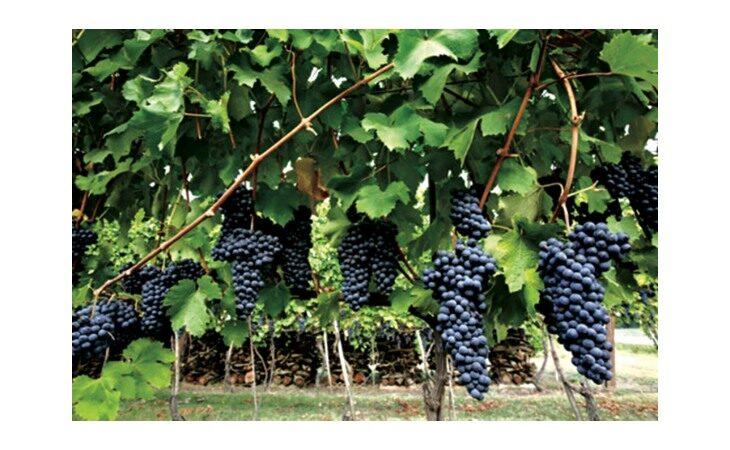 Torna l'assaggio di vini all'Enoteca regionale nella Rocca di Dozza, oggi il primo appuntamento