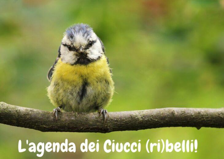 L'agenda dei Ciucci (Ri)belli: 22-28 marzo 2021