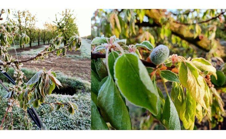 Maltempo e gelate di aprile, gravi danni a piante e frutti. Il punto di Cia, Coldiretti e Confagricoltura