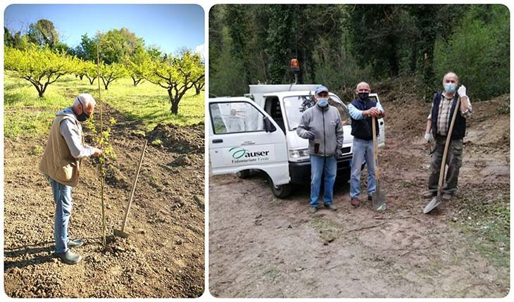 A Casalfiumanese messi a dimora 48 nuovi faggi e querce grazie anche ai volontari Auser