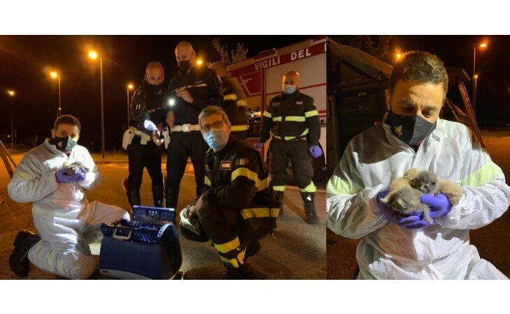 Gattini abbandonati in un cassonetto a Ponticelli, salvati grazie ad una segnalazione di due cittadine