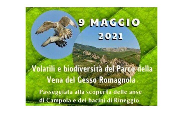 Passeggiata tra volatili e biodiversità della Vena, da Borgo alle anse di Campola e Rineggio