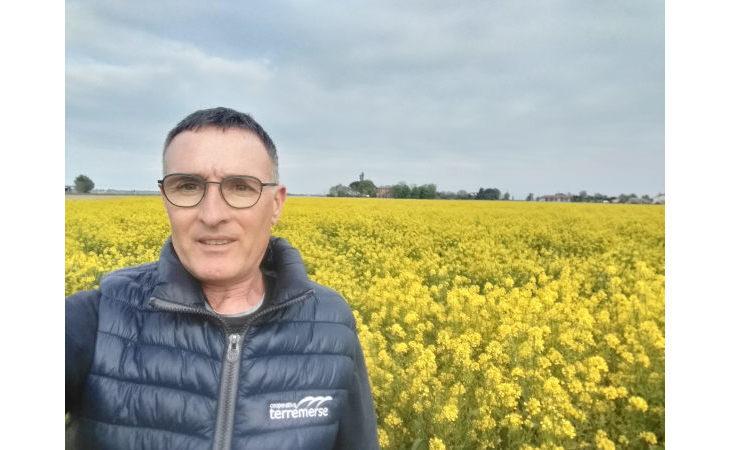 Colza, l'interesse di Terremerse per la brassicacea da cui si ricava biodiesel