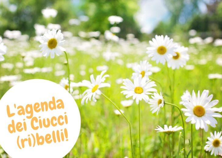 L'agenda dei Ciucci (ri)belli: 10-16 maggio 2021