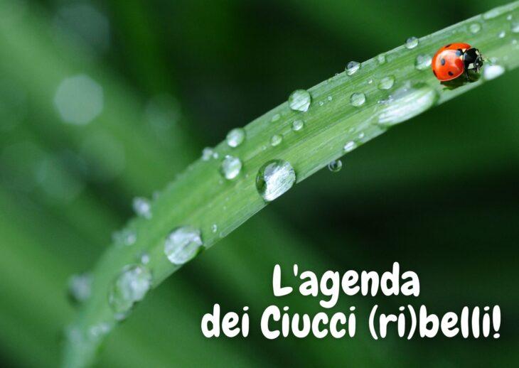 L'agenda dei Ciucci (ri)belli: 17-23 maggio 2021