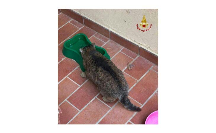 Gatto incastrato in un tubo di areazione salvato dai vigili del fuoco