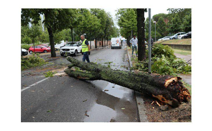 Maltempo, a Imola danni ed alberi abbattuti dal vento. Disagi anche a Dozza