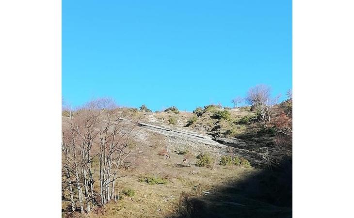 Escursione, 8 ore col Cai di Imola «dal passo del Muraglione al bivacco Sassello»