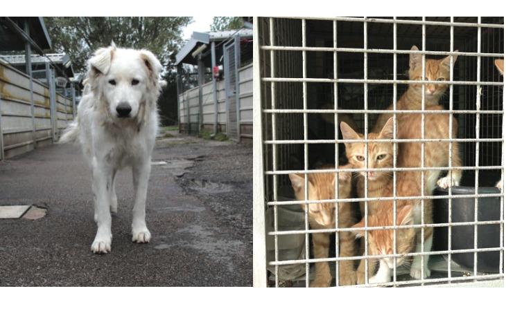 Benessere animale, cosa prevedono i lavori al canile e gattile di Imola e Medicina