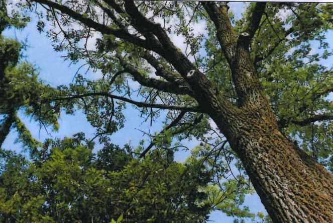 Alberi pericolanti ad Ozzano, in questi giorni gli interventi di abbattimento e potatura