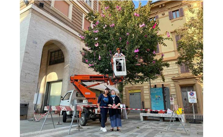 Lilt Imola, un omaggio alla foto migliore dell'«albero della prevenzione»