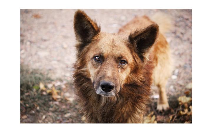 A Casalfiumanese approvata la convenzione con il Circondario per il recupero dei cani randagi
